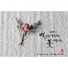 Pink rose, 사랑의 맹세 신비한 매력